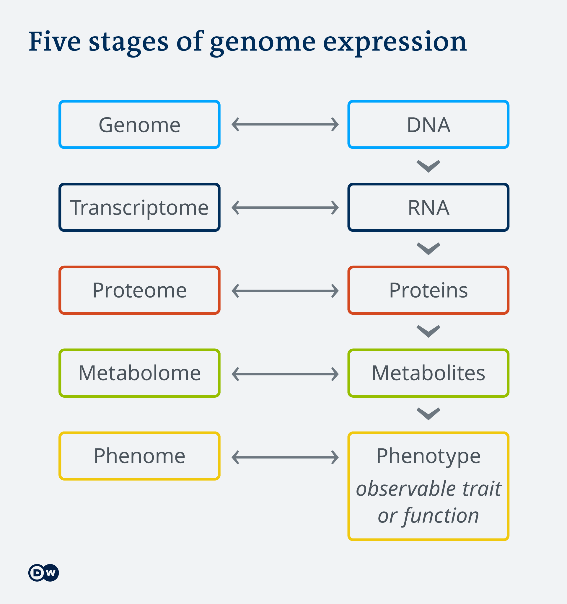 Infographic: Fives stages of genome expression EN