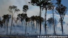 Brasilien Amazonas Waldbrand