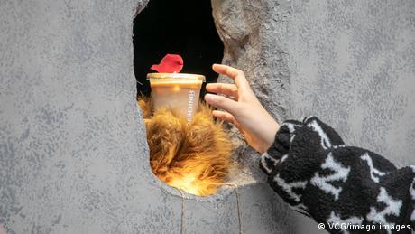 Rupa u zidu je autentična, medveđe šape koje isporučuju kafu su zapravo rukavice i zaštitni znak. Malena kafedžinica u centru Šangaja otvorena je pre par nedelja i postala je hit na društvenim mrežama ne samo zbog originalnog izgleda, već i jer tamo rade bariste (kafedžije) sa invaliditetom. Recimo sa oštećenim sluhom – zato se porudžbine uzimaju skeniranjem koda istaknutog ispod rupe u zidu.