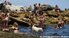 Ein Hund kühlt sich während der Hitzewelle am Bondi Beach im Wasser ab.