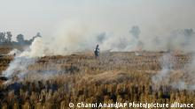 An Indian farmer burns crop stubble after harvesting paddy near the India-Pakistan international border, in Ranbir Singh Pura, India, Wednesday, Nov.28, 2018. Stubble burning is considered one of the major causes of air pollution in India. (AP Photo/Channi Anand)