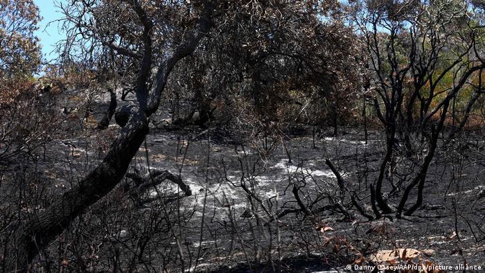 Burnt trees on Fraser Island