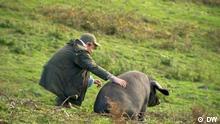 DW Sendung Fokus Europa | Großbritannien Rewilding