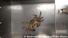 Deutschland BdT | Krabbe fährt S-Bahn