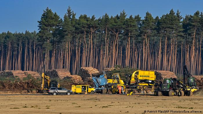 Machines are seen next to trees that were cleared on the construction site of Tesla's new factory near Berlin