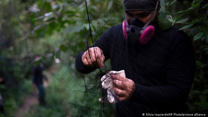 Brasilien Rio de Janeiro | Forschung an Fledermäuse | Pandemien
