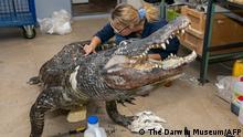Russland I Alligator Saturn kommt ins Museum