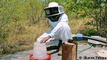 Botswana | Klimawandel Bienen | Kago Mongagae