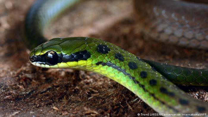 Bolivien Zongo Valley   neue Tierarten entdeckt