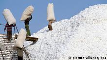 Baumwollanbau in China - Ernte