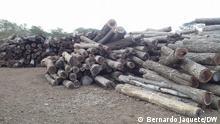 Holz, Manica, Mosambik