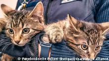 BdT Katzenbabys in Polizeirevier Stuttgart