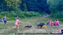 Berlin | Nudist rennt Wildschwein mit Laptop hinterher