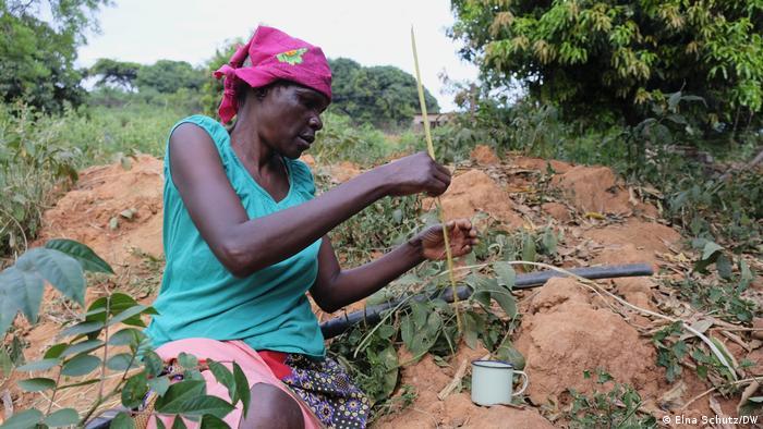 Una señora saca a las termitas de sus montículos para comer.
