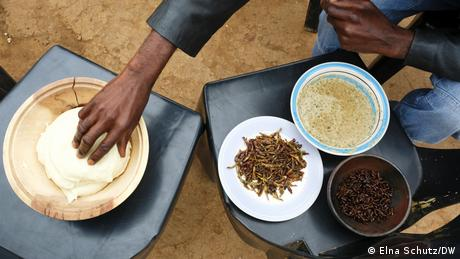 A man grabs some thick maize porridge to eat it with cooked and fried grasshoppers, termites and a sauce