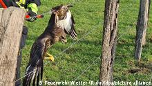 Deutschland Ennepe-Ruhr-Kreis |Greifvogel in Stacheldraht