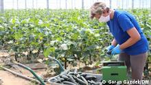 Kroatien Landwirtschaft