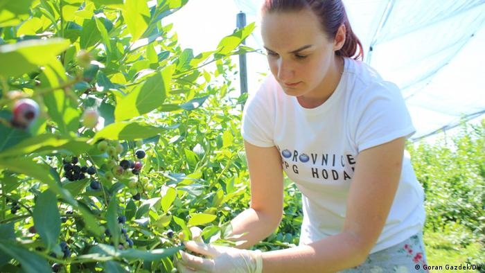 Samo 12,8 posto hrvatskih poljoprivrednika je mlađe od 28 godina