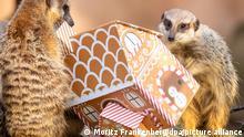 BdT Tierische Bescherung im Erlebnis-Zoo Hannover