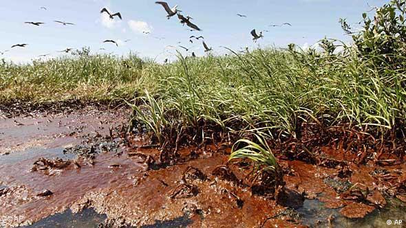 Öl in einem Naturschutzgebiet in Louisiana (Foto: AP)