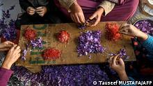 Indien Kaschmir | Safrananbauregion Pampore