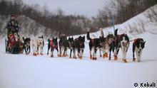 Standbild Dokumentation |KW1 |Mit dem Schlittenhund durch Norwegen