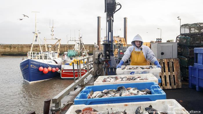 Fishing bait is unloaded at a port in Yorkshire