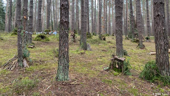Šuma kod Nirnberga