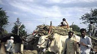 Indien: Begegnung auf dem Land