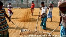 Bangladesch Landwirtschaft Reis Munshiganj