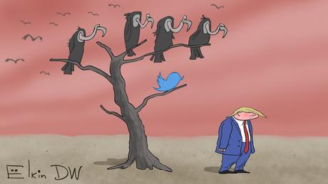 A cartoon showing vultures in a tree looking down on Trump
