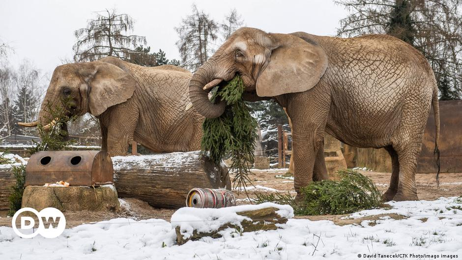Bild des Tages: Delikatesse Weihnachtsbaum
