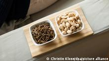 A bowl of edible mealworms served next to a bowl of peanuts