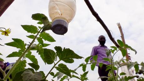 Eco Africa - Solar-powered irrigation system for Rwandan farmers