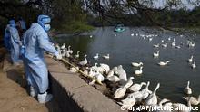 Indian authorities have been slaughtering birds and poultry to control the outbreak of deadly avian influenza
