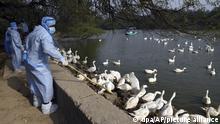 Indien Vogelgrippe