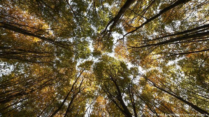 Vista da copa de uma floresta em Hendek, distrito de Sakarya, na Turquia.