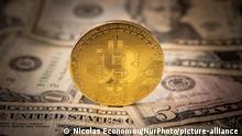 Bitcoin golden physical coin illustration on United States Dollar banknotes. Visual representations of the digital Cryptocurrency Bitcoin with the USD bill. Bitcoin with the symbol BTC, XBT is a popular digital currency that showed growth and is widely spread, accepted from banks, markets and other services and shops as ways of payments. The exchange rate today for 1 bitcoin blockchain is 34.588 US Dollar. On January 7, 2021 Bitcoin's price crossed 40,000 for the first time and the next day on January 8, 2021 Bitcoin traded with the historical record price as high as $41,973 while the next day Price briefly fell as much as 26% but pared losses to trade around $33,400 whipping $200 billion of trade value from the cryptocurrency market in 24 hours according to American Financial media. Eindhoven, the Netherlands on January 13, 2020 (Photo by Nicolas Economou/NurPhoto)