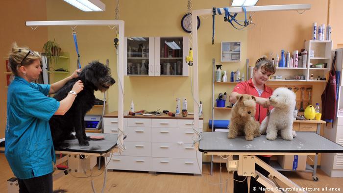 بخش خدمات حیوانات خانگی مثل آرایشگاه، سگ گردانی یا پانسیون نگهداری از حیوانات خانگی هنگامی که صاحبان در مسافرت هستند، همچنان در حال رشد است. برای نمونه در حال حاضر بیش از ۵ هزار آرایشگاه برای سگها در آلمان تاسیس شده است.