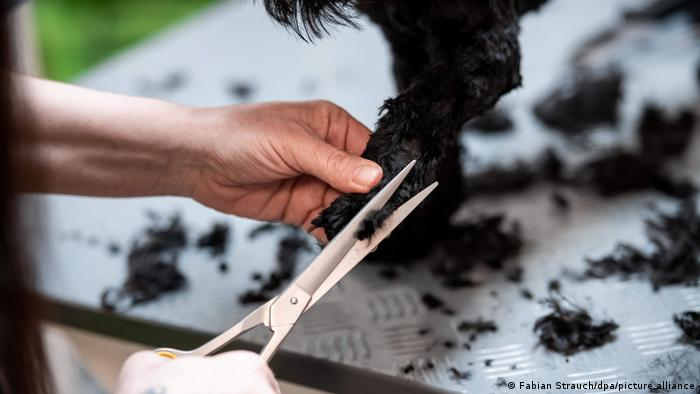 A dog getting groomed