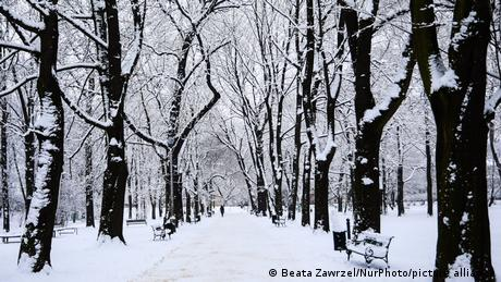 Snow-covered trees in a park in Krakow, Poland