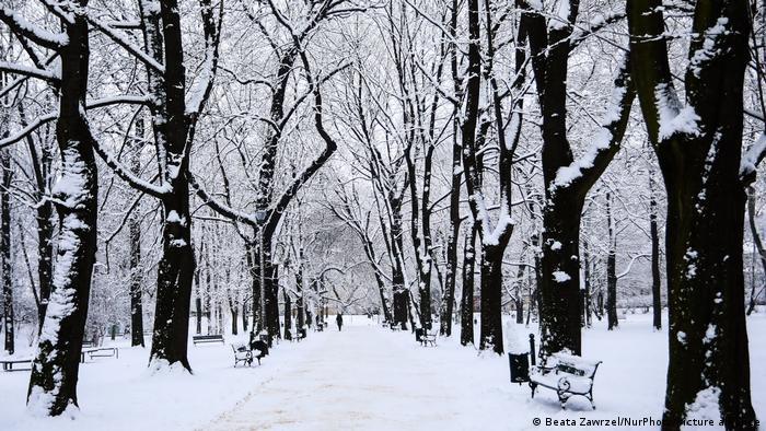 Zasnežené stromy v parku v poľskom Krakove