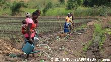 Frauen arbeiten auf einem Feld einer Kooperative in der Republik Kongo