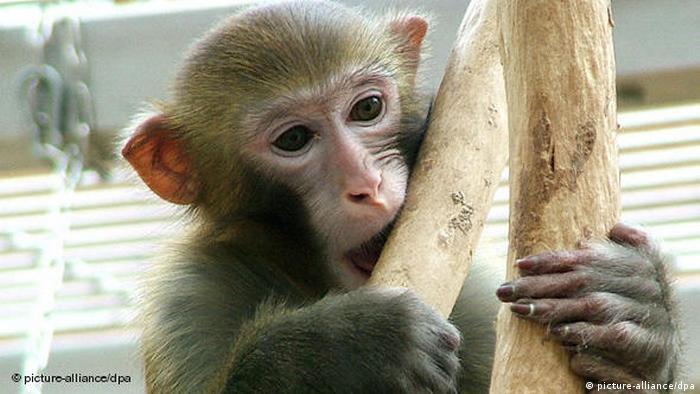 Un macaco.
