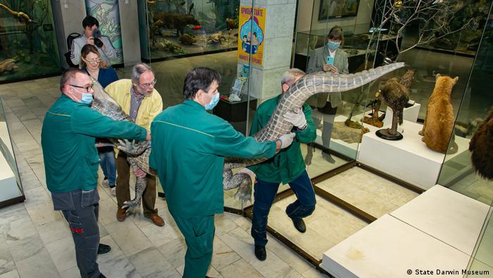 Чучело устанавливают в музее