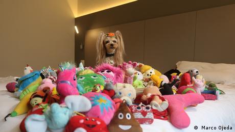 Yorkshire Terrier Vicky Nina mit Spielzeug