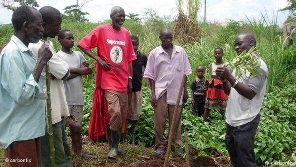 A reforestation project in Africa