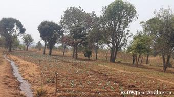 Landwirtschaft im südlichen Angola