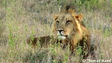 DW Sendung Eco Africa Show#254 Nachhaltiger Naturschutz in Kenia