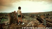 Regenwaldzerstoerung Regenwald Umweltzerstörung Zerstörung von Lebensraum